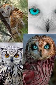 11416 Best Hiboux Images On Pinterest | Owls, Snowy Owl And Great ... Tasmian Masked Owl Wikipedia Sylvierland Moments And Thoughts Owl In Front Of The Farmer Writes Threats To Barn 13 October 2015 Free Barn New Zealand Birds Online Tyto Alba Species Owls Have Nesting Bonanza Region Npareilonlinecom How Find Photograph Owls Bird Photography Audubon Ms De 25 Ideas Increbles Sobre Sounds En Pinterest Kansas Citys Get All The Help They Need At Lakeside Nature Australia Australian Geographic Local Wildlife Landscape Our Local Voice