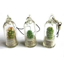 kaktus live terrarium anlage baby halskette der sukkulenten nadel bonsai kaktus live terrarium schlüsselbund zubehör buy kaktus live terrarium
