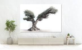017 olivenbaum mallorca mayol