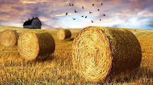 Time Hay Autumn Harvest Firefox Persona Birds Sky Summer Farm Fall Bales Country Field Barn Free Wallpapers