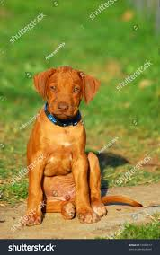 Cute Little African Liver Nosed Male Stock Photo 19956913 ... Grumpy Senior Dog In The Backyard Stock Photo Akchamczuk To With Love January 2017 Friendly Ideas In Garden Pricelistbiz Portrait Of Female Boxer Dog Standing On Grass Backyard Lavish Toys For Dogs Toy Organization February Digging Create A Sandbox Just For His Digging I Like Quite Moments Fall Wisconsin Quaint Revival Yesterday Caught My Hole Today Unique Toys Architecturenice Cia Fires Since Sniffing Bombs Wasnt Her True Calling Time A View From Edge All Love Part Two