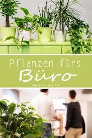 top 9 luftreinigende pflanzen fürs büro pflanzen fürs büro