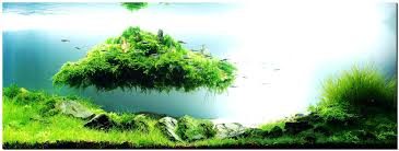 Aquascape Setup Articles With Freshwater Aquarium Community Tank ... King5com Fding Zen Through Aquascapes The Worlds Newest Photos By Pacific Aquascape Flickr Hive Mind Pacific Aquascape 28 Images Westin Photo Courtesy Of Christian Another Beautiful Pool Aquascapes For Luxury Living In Swimming Pool Contractors In Oahu Hi Aquascapes Ada Aquascaping Contest Homedesignpicturewin Submerged Jungle Fekete Tamas Awards Jungle 241 Best Aquatic Garden On Pinterest Aquascaping 111 Amazing Aquariums And The666 Extreme18