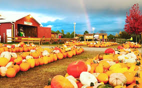 Pumpkin Patch Portland by America U0027s Best Pumpkin Farms Travel Leisure