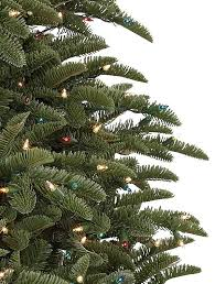 Shasta Fir Tree 3