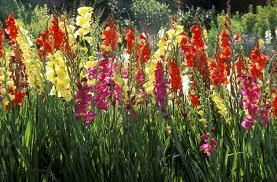 50 Best Types of Flowers – Pretty of Garden Flowers
