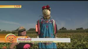 Sacramento Pumpkin Patch With Petting Zoo by Bobby Dazzler Pumpkin Patch Youtube
