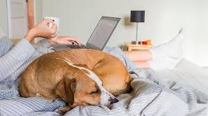 hund bett hygiene der hund schläft mit im bett eklig