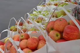 Hillcrest Farms Pumpkin Patch by Pre Picked And U Pick Apples At Hillcrest Orchard Located In
