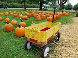 Southern Ohio Pumpkin Patches by Sizemore Farm Home Facebook