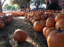 Pumpkin Patch Fort Worth Tx by 50 Shades Of Orange The Secret Life Of Dfw Pumpkins