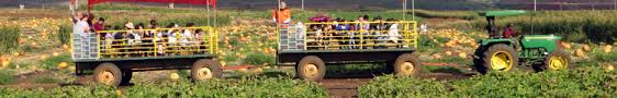 Aloun Farms Pumpkin Patch Address by Visit A Real Pumpkin Patch And Start Your Hawaii Holiday Season