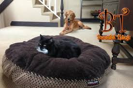 Kirkland Dog Beds by Trendy Cat In Dog Bed 96 Cat Steals Dog Bed Gif Dog Beds