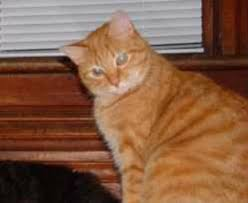 orange cat names cat names choosing a name for your cat