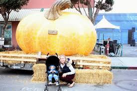 Worlds Heaviest Pumpkin Pie by Meet The Sullivans Pastorino U0027s Pumpkin Farm Hmb Pumpkin