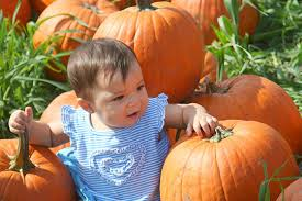 Pumpkin Patch Cal Poly Pomona by Claremont Courier Photography