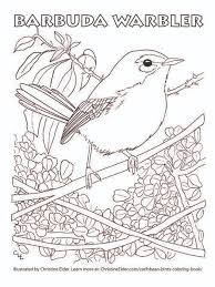 Barbuda Warbler Coloring Page Pdf