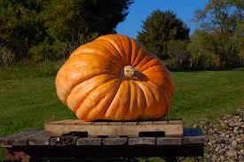 Pumpkin Festival Maine by 3 Of The Best Ways To Enjoy The Damariscotta Pumpkinfest