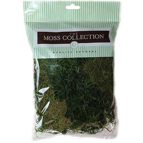 Quality Growers Preserved Spanish Moss - Apple Green