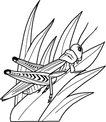 Free Printable Insects Grasshoppers Childrens Coloring Sheets For Kids