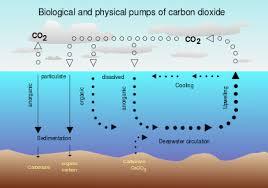 carbon sink wikipedia