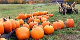Pumpkin Picking Corn Maze Long Island Ny by Your Guide To Fall Activities On Long Island