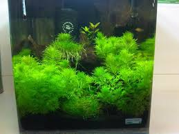 how to set up a nano aquarium warehouse aquatics