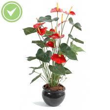 plantes vertes d interieur pot de fleur d interieur 3 plante verte dint233rieur haute