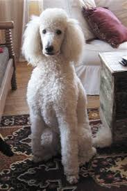 dog grooming courses groom your dog at home large breed dogs that