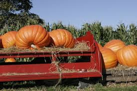 Chatham Kent Pumpkin Patches by 7 Fall Weekend Activities That Will Get You Off Campus Her Campus
