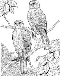 Free Printable Adult Coloring Pages Bird