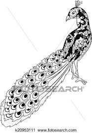 Clipart Of Hand Drawing Peacock K20953111