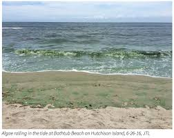 Is Bathtub Beach In Stuart Fl Open by Governor Declares State Of Emergency As Harmful Algae Blooms Cover