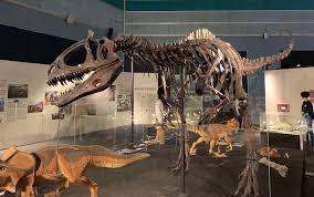 Discover Real Fossils And New Dinosaurs At Science Centre ... Jurassic Quest Tickets 2019 Event Details Announced At Dino Expo 20 Expo 200116 Couponstayoph Jurassic_quest Twitter Utah Lagoon Coupons Deals And Discounts Roblox Promo Codes Available Robux Generator June Deal Shen Yun Tickets Includes Savings On Exclusive Coupon For Dinosaur Experience In Ccinnati Show Candytopia Code Home Facebook Do I Get A Discount My Council Tax Newegg 10 Off Promo Code Blue Man Group Child Pricing For The Whole Family