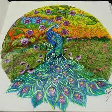 Peacock Secret Garden Pavao Jardim Secreto Johanna Basford Coloring BookPeacock