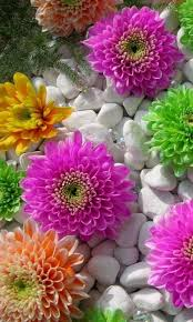 Flowers Mobile Wallpapers Hd 32