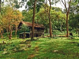 Forest Stay Log Huts And Tented Cottages At Kyathadevara Gudi Jungle Lodge Karnataka