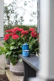 28 best garden gerbera images on pinterest gerbera daisy and