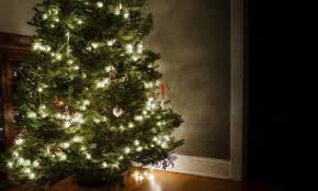 Mr Jingles Christmas Trees Los Angeles Ca by Mr Jingles Christmas Trees Boise
