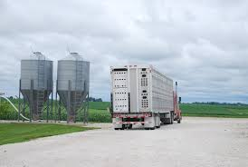 DOT Grants Yet Another ELD Rule Waiver For Livestock Haulers ... Trucking The Worlds Best Photos Of 389 And Livestock Flickr Hive Mind About Metzger Agricultural Exemptions Instated For Regulations Pork Firms Worried Electronic Logging Device Could Hurt Henderson Jobs Otr Long Haul Truck Drivers West Land Cattle Hauler Jessica Lorees 2003 Pete 379 Livestockcattle Haulers Sale Llc Kenworth T800 With 4 Axle Tra Truck Spill Cleaned Up A Lot Help Krvn Radio Australian Livestock Rural Transporters Association