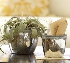 Whitley Vases