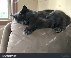 Fluffy Cat Asleep On Rocking Chair Stock Photo (Edit Now ...