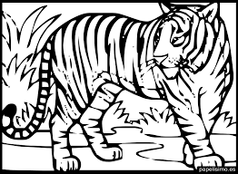 Zoo 57 Animales Páginas Para Colorear