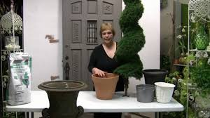 How To Pot A Spiral Topiary For Outdoor Or Indoor Use YouTube