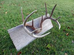 an easy diy method to mount shed antlers sole adventure