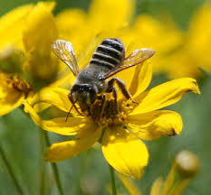 Attracting Insects To Your Garden by Buzz On Attracting Beneficial Insects To Your Garden U2013 Phigblog