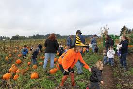 Waimanalo Pumpkin Patch Oahu by Waimanalo Country Farms Home Facebook