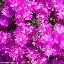 Free Images Flower Purple Botany Flora Flowers Sunny Shrub