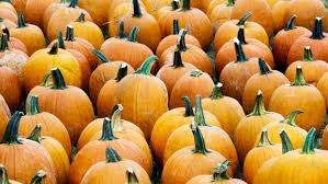Livermore Pumpkin Patch by The Bay Area U0027s Best Pumpkin Patches Off Your Plate