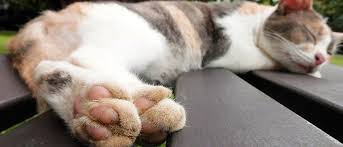 how to cut a cats nails the no fear way to trim your cat s nails vetbabble